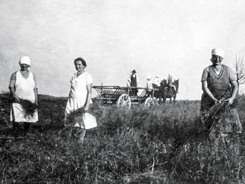 Feldarbeit-1924